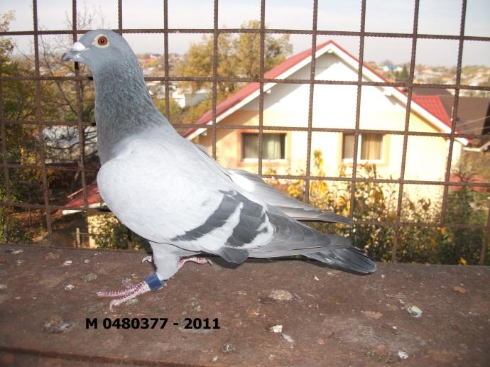 m-0480377-2011.jpg racovita
